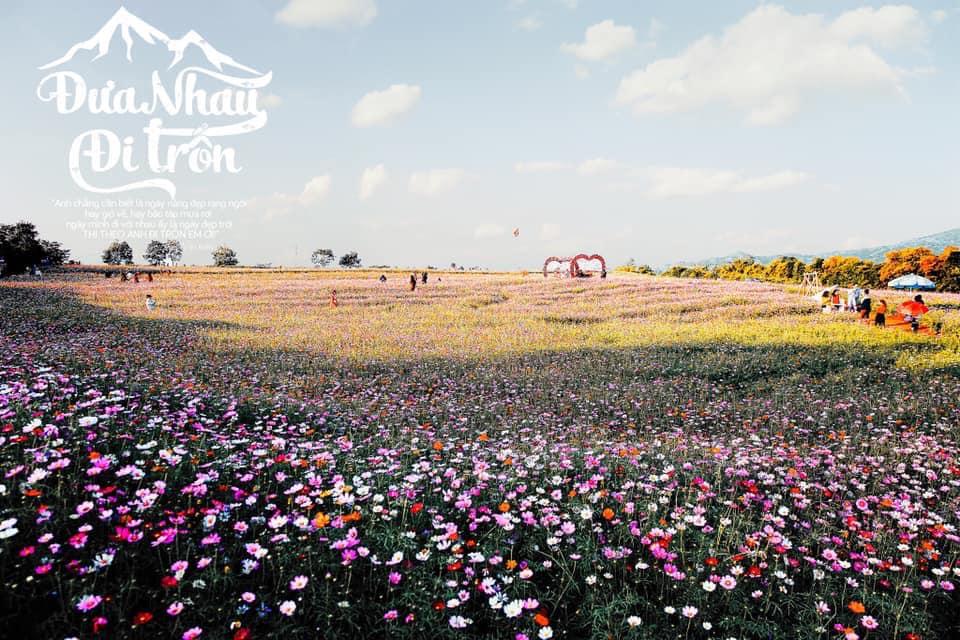 Đồi hoa đẹp như một tấm thảm, thu hút rất nhiều du khách